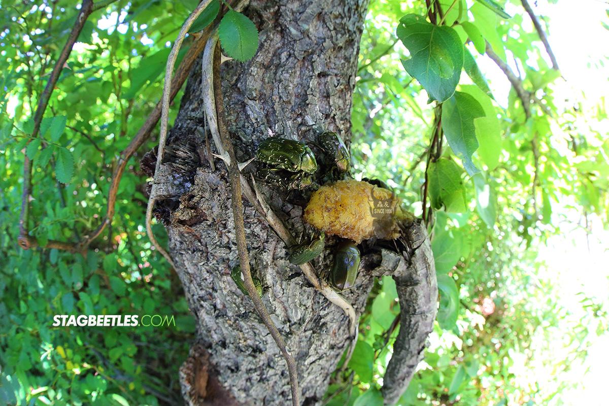 참나무수액의곤충들2.jpg